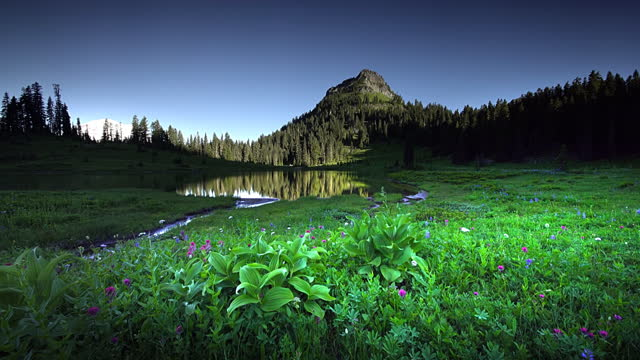 wildflowers and lake tipsoo - meadow stock videos & royalty-free footage
