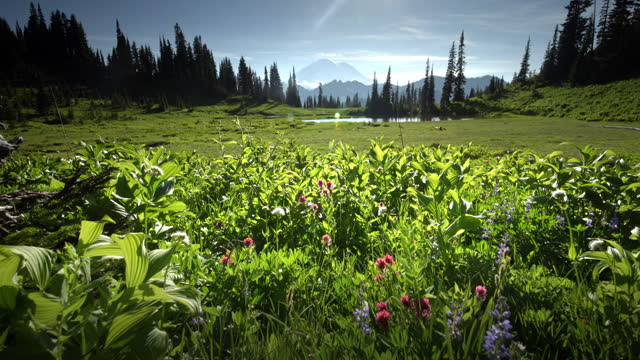 wildflowers and lake tipsoo - grass stock videos & royalty-free footage