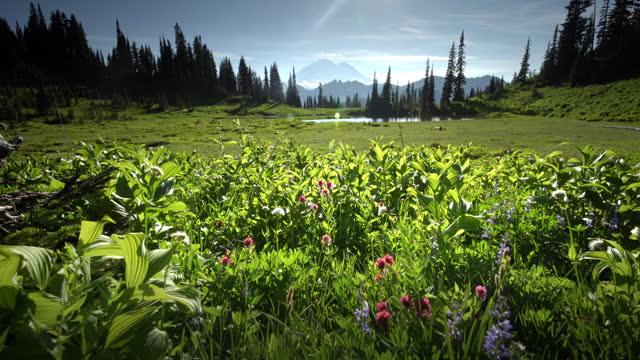 wildflowers and lake tipsoo - wildflower stock videos & royalty-free footage