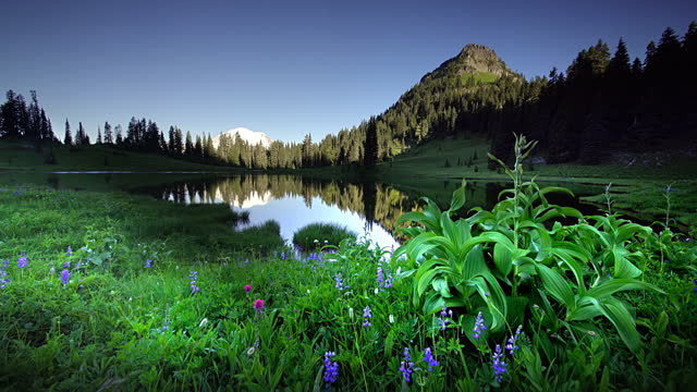wildflowers and lake tipsoo - uncultivated stock videos & royalty-free footage