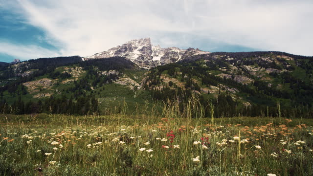 Wildflowers and mountain in Wyoming