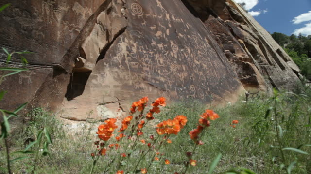 Wildflowers and Native American Newspaper Rock petroglyphs Utah