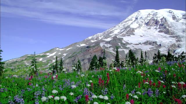 wildflowers bloom in a mountain meadow. - 水の形態点の映像素材/bロール