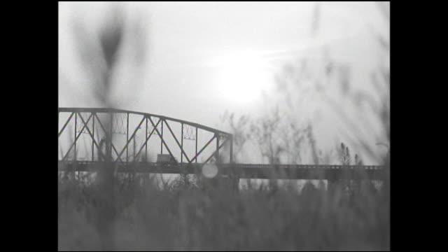 wildflowers frame a view of the bando bridge and tone river in japan. - kantilever bildbanksvideor och videomaterial från bakom kulisserna