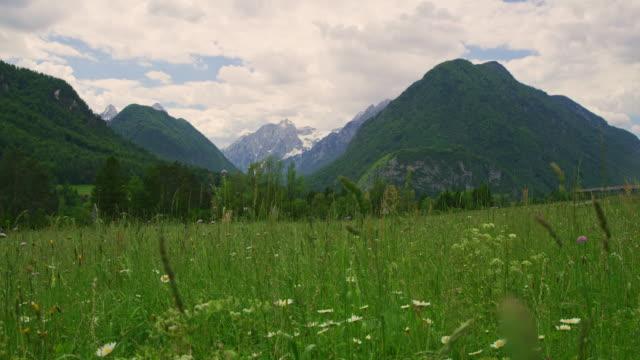 vídeos y material grabado en eventos de stock de ws wildflowers que crecen en la soleada e idílica pradera del valle de la montaña - parque nacional