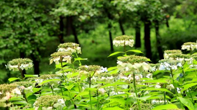 wildflowers in bloom, namsan mountain, seoul, south korea - pistil stock videos & royalty-free footage
