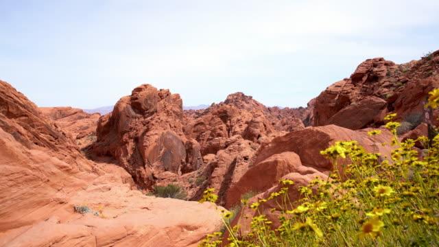 vidéos et rushes de ds fleurs sauvages dans le parc national de canyonlands - low angle view
