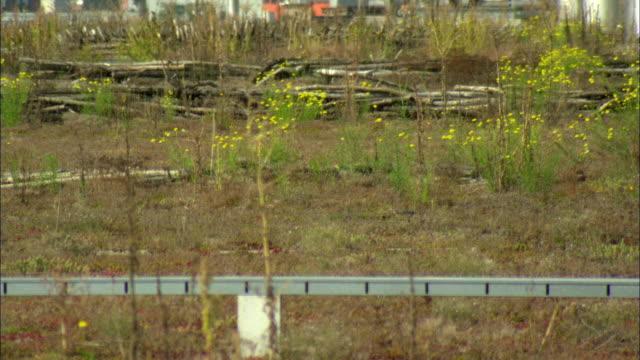 vídeos y material grabado en eventos de stock de ms r/f wildflowers in meadow / basel, switzerland - terrenos a construir