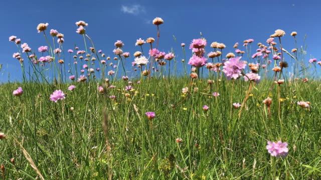 wildblumen auf der wiese - wildblume stock-videos und b-roll-filmmaterial