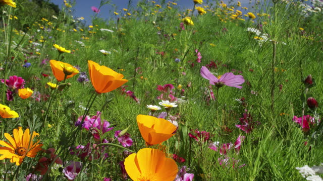wildflowers in meadow - wildflower stock videos & royalty-free footage