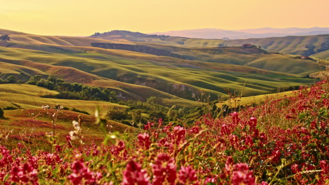 ds wildflowers in the wind of tuscan countryside - rolling landscape stock videos & royalty-free footage