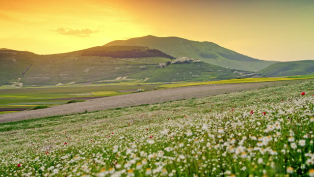 ws wildflowers in tranquil, scenic mountain valley at sunset, castelluccio, umbria, italy - wildflower stock videos & royalty-free footage