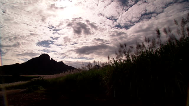 vidéos et rushes de wildflowers on a hillside dance in the breeze with a mountain in the background. - colline