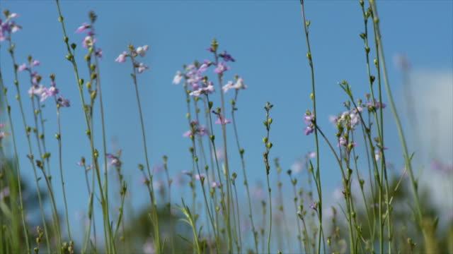 vídeos y material grabado en eventos de stock de flores silvestres de primavera día - erial