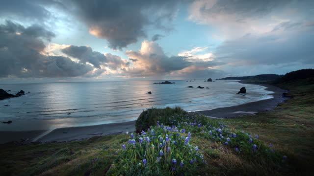 Wildflowers on bluff overlooking Pacific ocean, Oregon