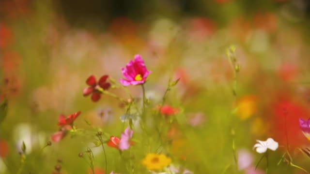CU TD SELECTIVE FOCUS Wildflowers on meadow, Blaubeuren, Allgaeu, Germany