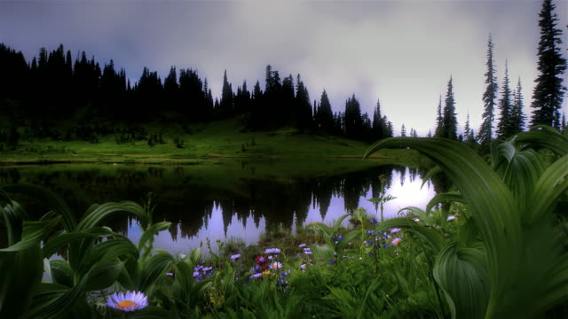 Wildflowers on the shore of lake at dawn