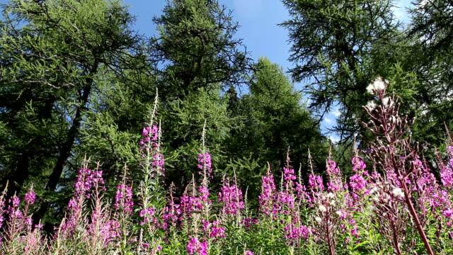 Wildblumen, pollen, Bienen und hornets