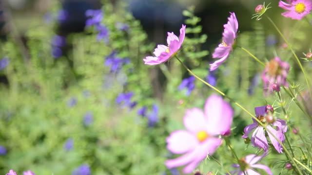 vídeos de stock e filmes b-roll de wildflowers swaying in the breeze - maeve quinlan