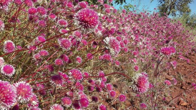 wildflowers - wildflower stock videos & royalty-free footage