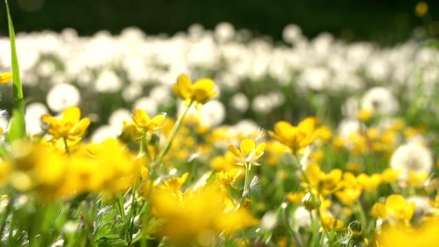 HD DOLLY: Wildblumen