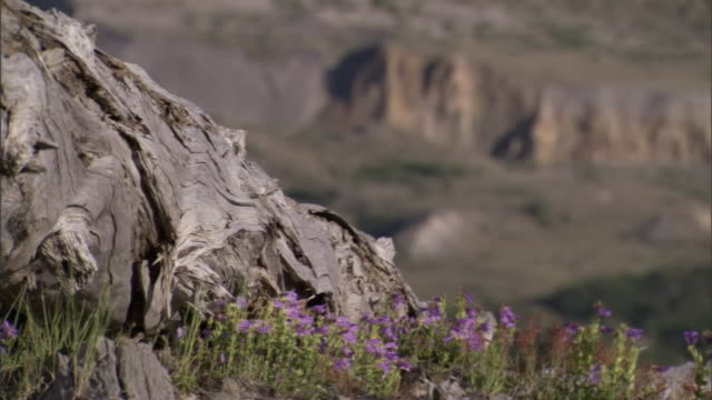 wildflowers wave in the wind near a weathered tree stump. - weathered stock videos & royalty-free footage