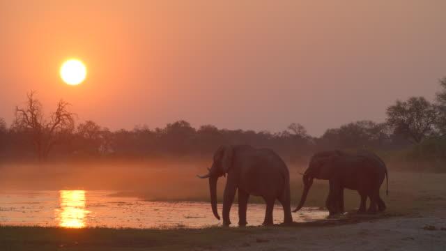 vidéos et rushes de wildlife and scenics, botswana - elephant