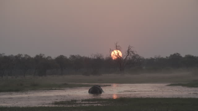 wildlife and scenics, botswana - 30 seconds or greater stock videos & royalty-free footage