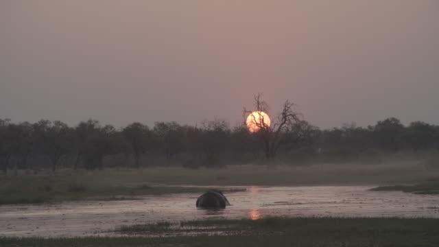 vídeos de stock e filmes b-roll de wildlife and scenics, botswana - 30 segundos ou mais