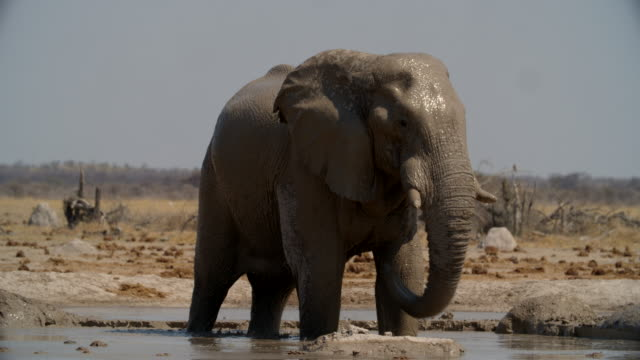 wildlife and scenics, botswana - tree trunk stock videos & royalty-free footage