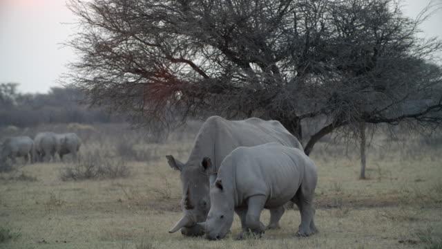 vídeos de stock, filmes e b-roll de wildlife and scenics, botswana - grupo pequeno de animais