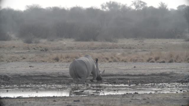 wildlife and scenics, botswana - reclining stock videos & royalty-free footage