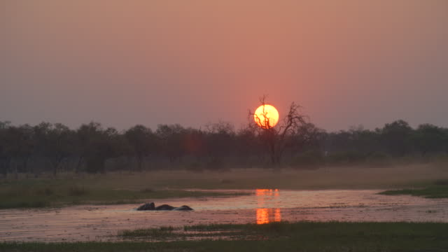 wildlife and scenics, botswana - taking a bath stock videos & royalty-free footage