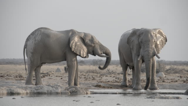 wildlife and scenics, botswana - spraying stock videos & royalty-free footage