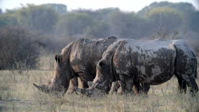 wildlife and scenics, botswana - ボツワナ点の映像素材/bロール