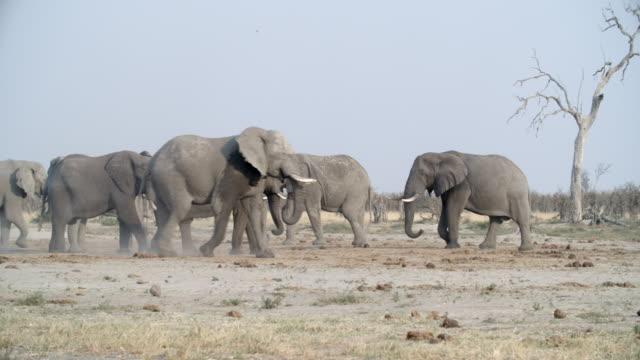 vidéos et rushes de wildlife and scenics, botswana - botswana