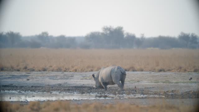 wildlife and scenics, botswana - safari animals stock videos & royalty-free footage