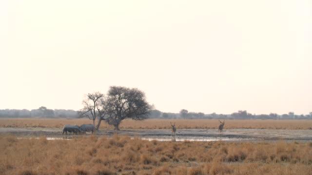 vidéos et rushes de wildlife and scenics, botswana - plan d'eau