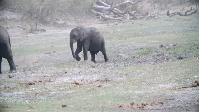 stockvideo's en b-roll-footage met wildlife and scenics, botswana - vier dieren