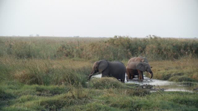 vídeos y material grabado en eventos de stock de wildlife and scenics, botswana - grupo pequeño de animales