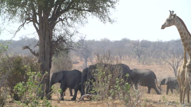 Wildlife and scenics, Botswana