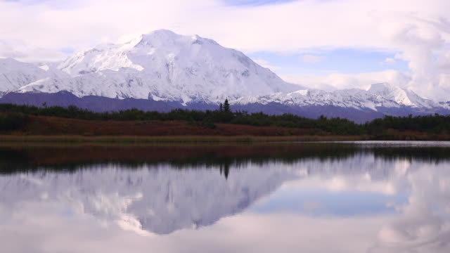 wildlife and scenics of alaska and denali national park - denali national park stock videos & royalty-free footage