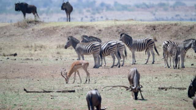 wildlife and scenics, pilanesberg national park, south africa - safari animals stock videos & royalty-free footage