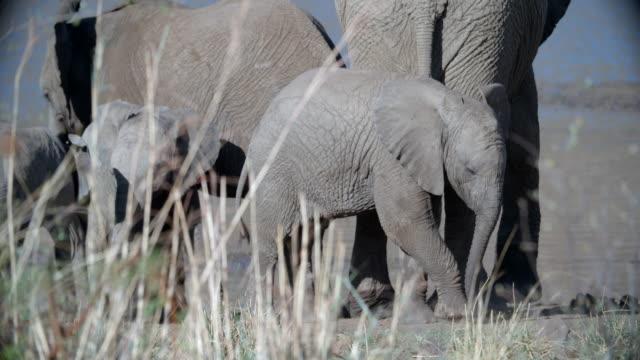 vídeos y material grabado en eventos de stock de wildlife and scenics, pilanesberg national park, south africa - cuatro animales