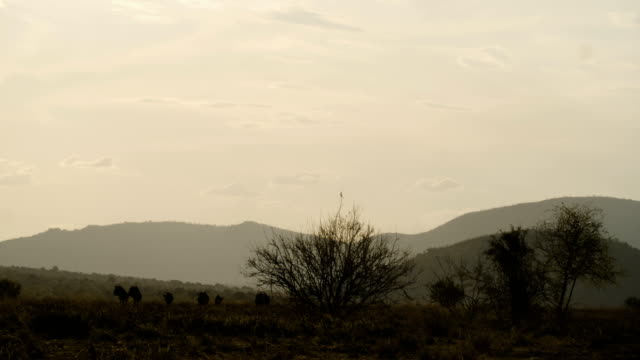 wildlife and scenics/ pilanesberg national park/ south africa - national grassland stock videos & royalty-free footage
