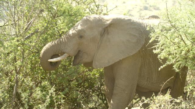 Wildlife and Scenics/ Pilanesberg National Park/ South Africa