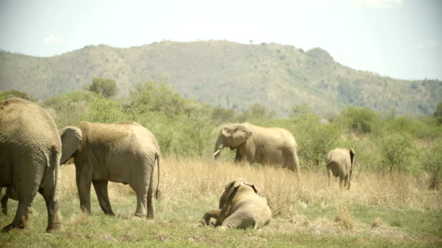 Wildlife and Scenics/ Pilanesberg National Park/ South Africa