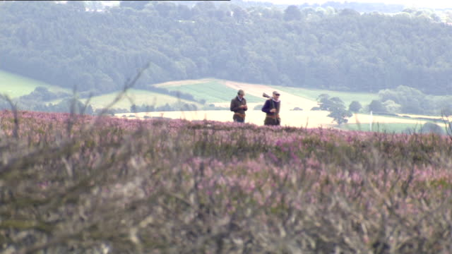 wildlife conservationists launch campaign to ban grouse shooting north yorkshire north york moors wide shot shooters crossing moorland on grouse shoot - north york stock videos & royalty-free footage