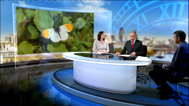 decreasing numbers of butterflies in uk england london gir int doctor martin warren live studio interview sot unidentified butterflies on wild... - itv lunchtime news stock videos & royalty-free footage