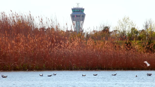 wildlife in llobregat natural park - airport control tower behind - water bird stock videos & royalty-free footage